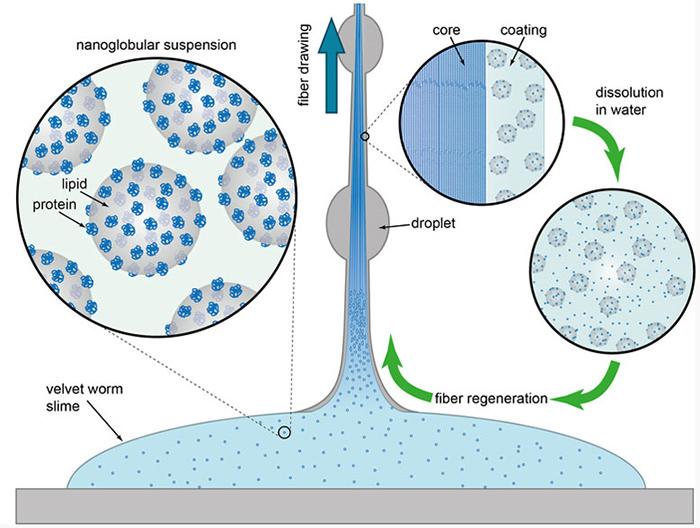 kadife solucanlarin civik maddeden salgiladiklari iblik haline gelmis fiber 1 - Kadife Solucanların Cıvık Maddeden Salgıladıkları İblik Haline Gelmiş Fiber