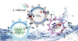 mantarlardan elde edilen enzimlerin kimyasal sentezi basitlestirmesi 310x165 - Mantarlardan Elde Edilen Enzimlerin Kimyasal Sentezi Basitleştirmesi
