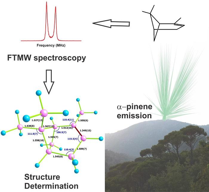 Bir Orman Aromasının Molekül Yapısı