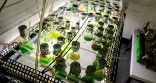 enzim uretiminden meydana gelen hidrojen gazi 310x165 - Enzim Üretiminden Meydana Gelen Hidrojen Gazı