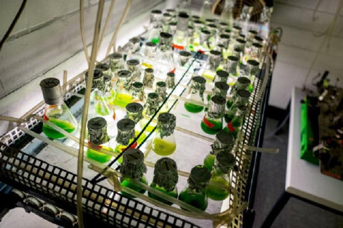 Enzim Üretiminden Meydana Gelen Hidrojen Gazı