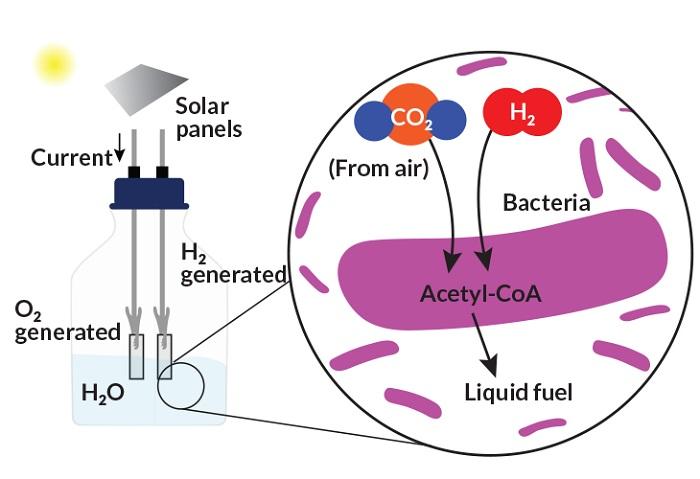 inorganik kimyager chong liu bitkilerden daha verimli fotosentez yapan sistem gelistirdi 1 - İnorganik Kimyager Chong Liu, Bitkilerden Daha Verimli Fotosentez Yapan Sistem Geliştirdi