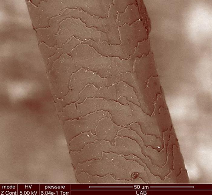 İnsanlar, Saçlarında Tanımlanan Proteinlerle Eşsiz Olabilirler