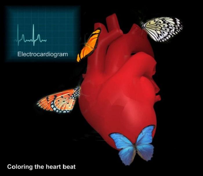 Kalp Atışlarını Renklendiriyoruz