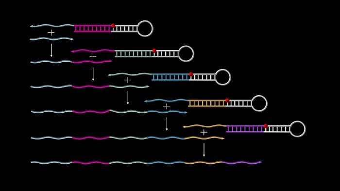 Kendi Kendine Oluşan Sentetik DNA Zincirleri