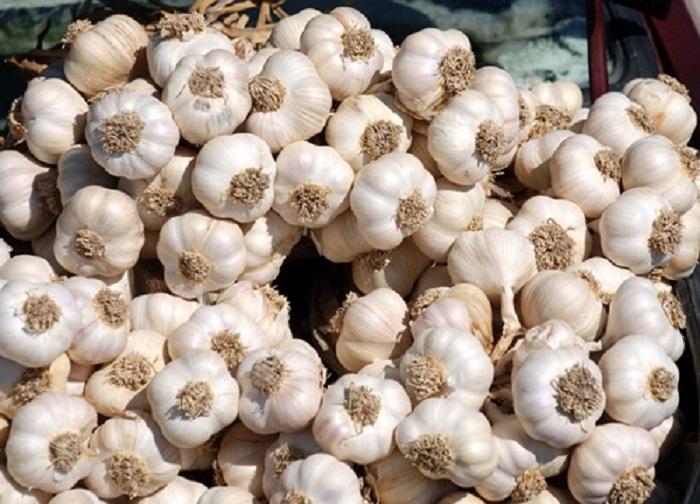 Sarımsak ve Flor Kombinasyonu İlaç Tedavisi Vaat Ediyor