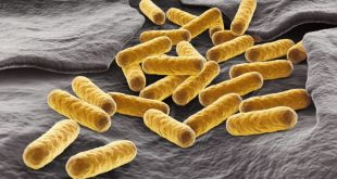 yeni metabolik patikalar daha iyi biyoyakitlar 310x165 - Yeni Metabolik Patikalar, Daha İyi Biyoyakıtlar
