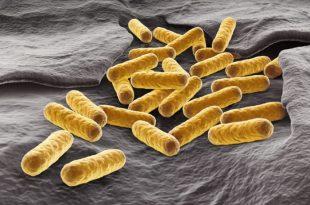 yeni metabolik patikalar daha iyi biyoyakitlar 310x205 - Yeni Metabolik Patikalar, Daha İyi Biyoyakıtlar