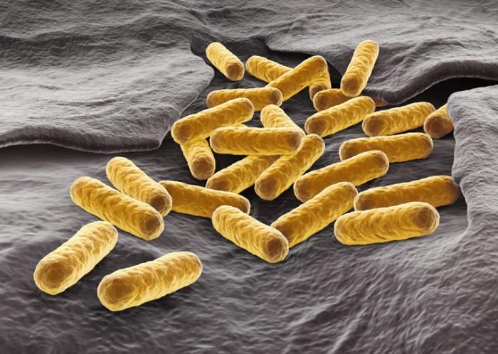 yeni metabolik patikalar daha iyi biyoyakitlar - Yeni Metabolik Patikalar, Daha İyi Biyoyakıtlar
