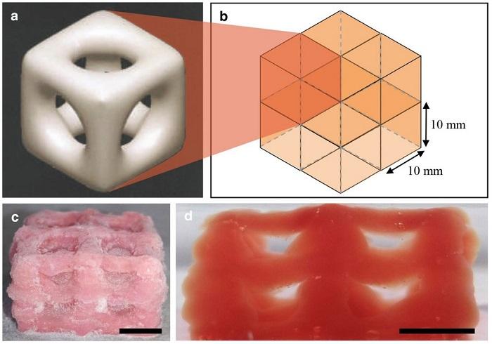 3D Baskı ile Beyin ve Akciğer gibi Süper Yumuşak Yapıları Çoğaltabilmek Mümkün mü?