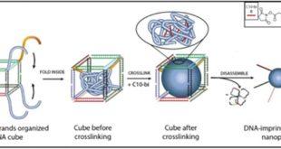 dna seritleri kullanarak yeni polimer malzemeler tasarlamak 310x165 - DNA Şeritleri Kullanarak Yeni Polimer Malzemeler Tasarlamak