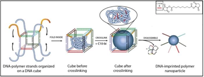 DNA Şeritleri Kullanarak Yeni Polimer Malzemeler Tasarlamak