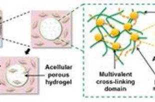 kemik onariminda nanokompozitler 310x205 - Kemik Onarımında Nanokompozitler