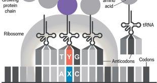 kimyagerler yapay proteinlerin yapiminda gerekli olan yapay dnalari kullanacak bakteri uretiyor 310x165 - Kimyagerler, Yapay Proteinlerin Yapımında Gerekli Olan Yapay DNA'ları Kullanacak Bakteri Üretiyor