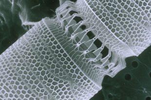 nanoteknoloji bu kez bira kalitesini gelistirmek icin kullanildi 310x205 - Nanoteknoloji Bu Kez Bira Kalitesini Geliştirmek için Kullanıldı