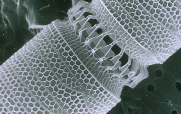 nanoteknoloji bu kez bira kalitesini gelistirmek icin kullanildi - Nanoteknoloji Bu Kez Bira Kalitesini Geliştirmek için Kullanıldı