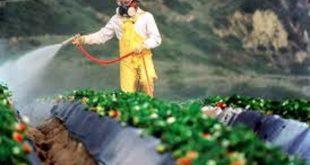 pestisitlerin ve cevre kimyasallarinin kokteyl etkisi 310x165 - Pestisitlerin Ve Çevre Kimyasallarının Kokteyl Etkisi