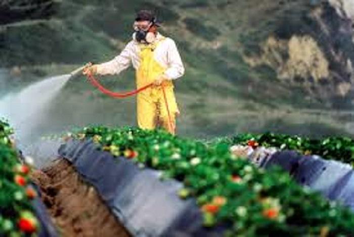 Pestisitlerin Ve Çevre Kimyasallarının Kokteyl Etkisi