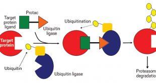 pfizer arvinas ile birlikte protein bozunmasi anlasmasina imza atiyor 310x165 - Pfizer, Arvinas ile Birlikte Protein Bozunması Anlaşmasına İmza Atıyor