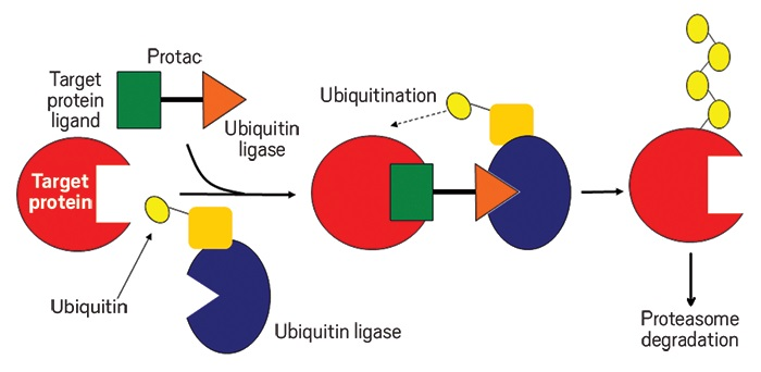 pfizer arvinas ile birlikte protein bozunmasi anlasmasina imza atiyor - Pfizer, Arvinas ile Birlikte Protein Bozunması Anlaşmasına İmza Atıyor