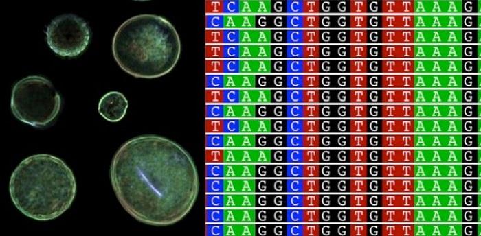 polen genetigi adli arastirmalara yardimci olabilir - Polen Genetiği Adli Araştırmalara Yardımcı Olabilir