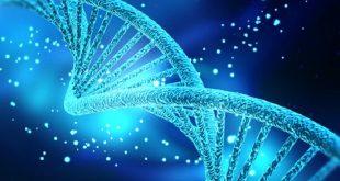 siradan deri hucresinden dogurgan kok hucre uretildi 310x165 - Sıradan Deri Hücresinden Doğurgan Kök Hücre Üretildi