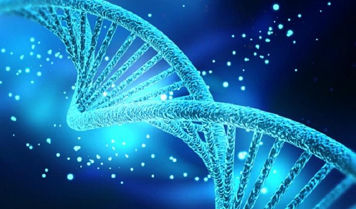 siradan deri hucresinden dogurgan kok hucre uretildi - Sıradan Deri Hücresinden Doğurgan Kök Hücre Üretildi