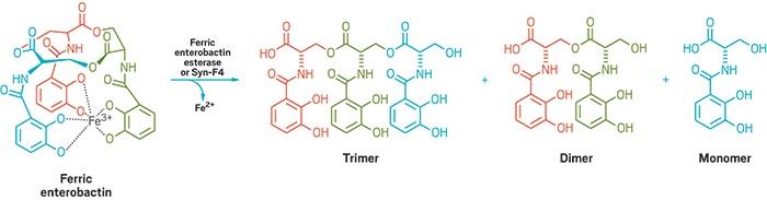 Tasarlanan Enzim Bakterilerin Hayatını Kurtardı