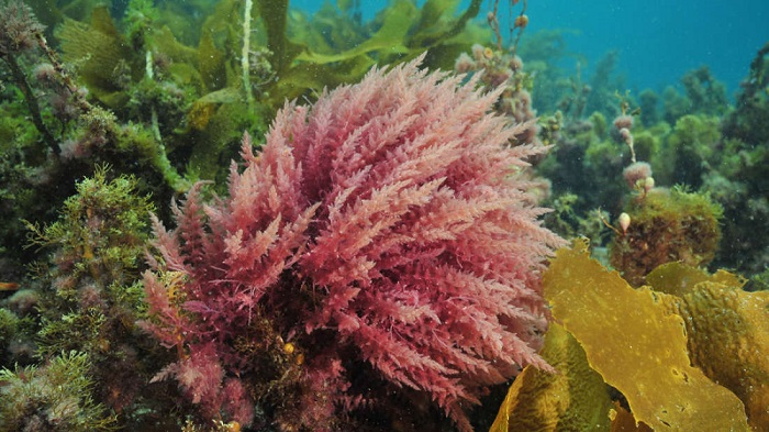 Deniz Yaşamının Rengi Küresel Isınmayı Durdurmada Yardımcı Olabilir