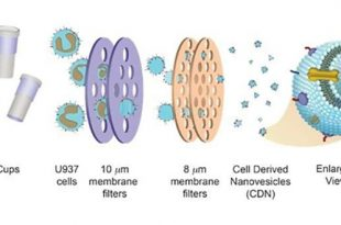 hucre kokenli ilac dagitim sistemleri 310x205 - Hücre Kökenli İlaç Dağıtım Sistemleri