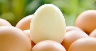 japon bilim insanlari temiz enerji icin yumurta beyazi kullaniyor 310x165 - Japon Bilim İnsanları Temiz Enerji için Yumurta Beyazı Kullanıyor