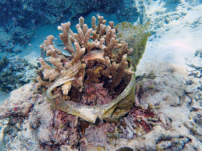 plastik atiklar mercan resiflerini tehdit ediyor - Plastik Atıklar, Mercan Resiflerini Tehdit Ediyor