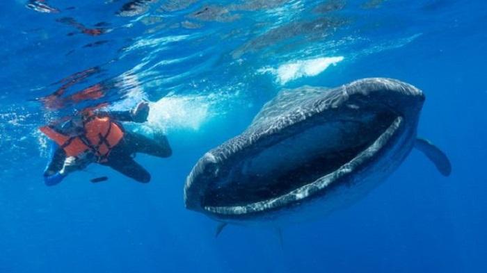 Plastik Kirliliği: Bilim İnsanları Okyanus Devlerine Etkisinin Araştırılmasını İstedi