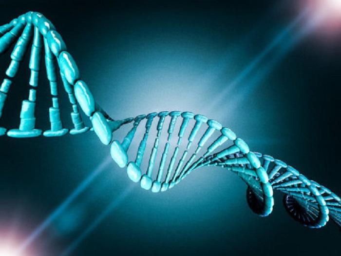 Araştırmacılar, İlk Defa CRISPR Genom Aktivasyonu Kullanarak Kök Hücreleri Oluşturuyor