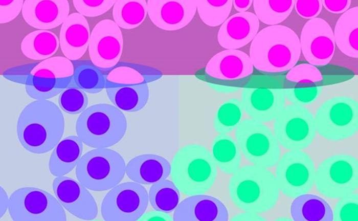 arastirmacilar tek hucrelilerdeki gen aktivitesini olctuler - Araştırmacılar Tek Hücrelilerdeki Gen Aktivitesini Ölçtüler