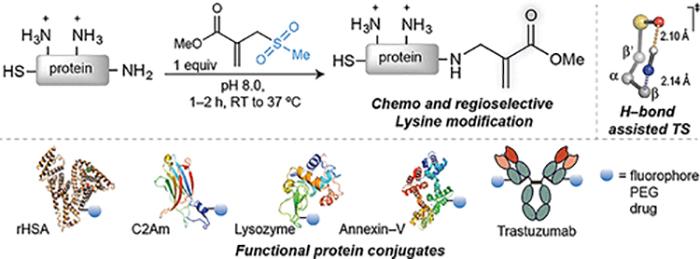 Bilgisayarda Tasarlanan Reaktifler Protein Modifikasyonu için Lizini Hedef Seçiyor