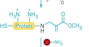 bilgisayarda tasarlanan reaktifler protein modifikasyonu icin lizini hedef seciyor 310x165 - Bilgisayarda Tasarlanan Reaktifler Protein Modifikasyonu için Lizini Hedef Seçiyor