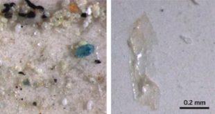 cinde masa tuzunda plastikten minik parcalar bulundu 310x165 - Çin'de Masa Tuzunda Plastikten Minik Parçalar Bulundu