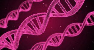 guney koreli bilim insanlarindan ledle kanser tedavisi 310x165 - Güney Koreli Bilim İnsanlarından LED'le Kanser Tedavisi