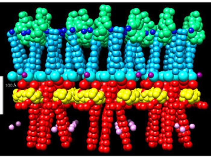 Kanser Hücrelerinin Anlaşılmasında Mitoz Yapısının Üzerine Çalışma