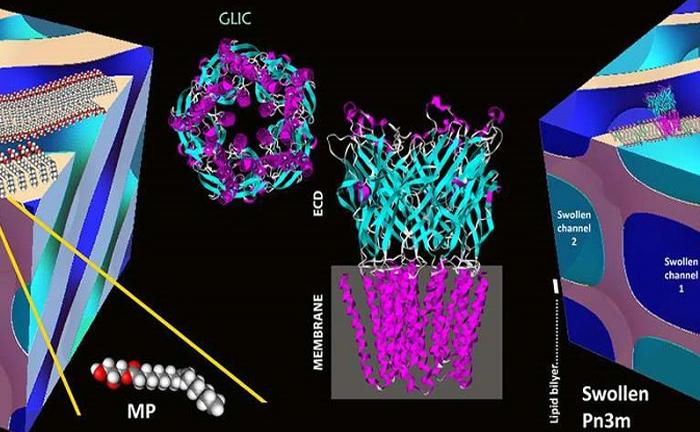 Protein Kristalizasyonu İçin Geliştirilen Yeni Yöntem