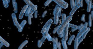 bilim insanlari 30 yillik bakterilerinin nasil yakit urettigi gizemini cozdu 310x165 - Bilim İnsanları, 30 Yıllık Bakterilerinin Nasıl Yakıt Ürettiği Gizemini Çözdü