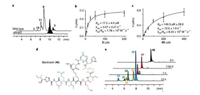 bilim insanlari peptit antibiyotiklerine karsi bakteriyel direncin yeni mekanizmasini buldu 1 - Bilim İnsanları Peptit Antibiyotiklerine Karşı Bakteriyel Direncin Yeni Mekanizmasını Buldu