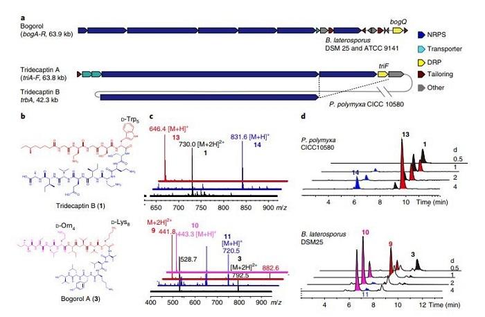 Bilim İnsanları Peptit Antibiyotiklerine Karşı Bakteriyel Direncin Yeni Mekanizmasını Buldu