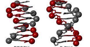 biyomimetrik kimya dna taklidi viral enzime galip gelir 310x165 - Biyomimetrik Kimya – DNA Taklidi Viral Enzime Galip Gelir