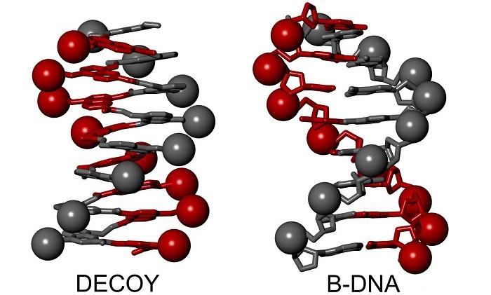 biyomimetrik kimya dna taklidi viral enzime galip gelir - Biyomimetrik Kimya – DNA Taklidi Viral Enzime Galip Gelir