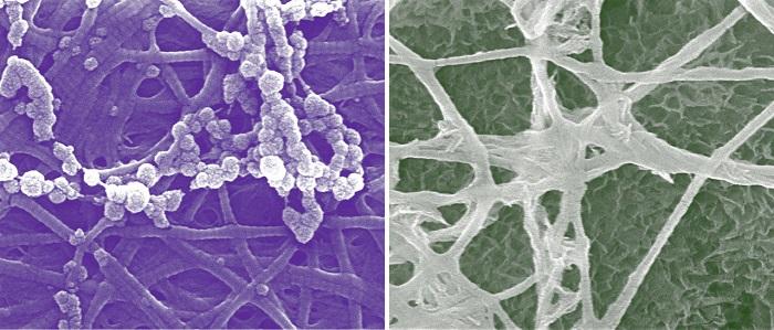 Kemik Gelişiminde Yeni Hücresel Keşifler