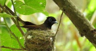 kuslar rotalarini nasil buluyorlar 310x165 - Kuşlar Rotalarını Nasıl Buluyorlar?