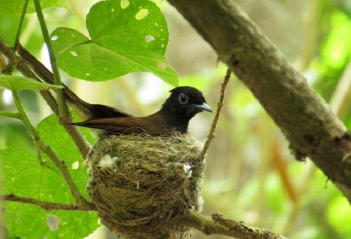 Kuşlar Rotalarını Nasıl Buluyorlar?