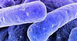 plastikleri yiyerek yok edecek bakteriler aslinda nasil calisiyorlar 310x165 - Plastikleri Yiyerek Yok Edecek Bakteriler, Aslında Nasıl Çalışıyorlar?